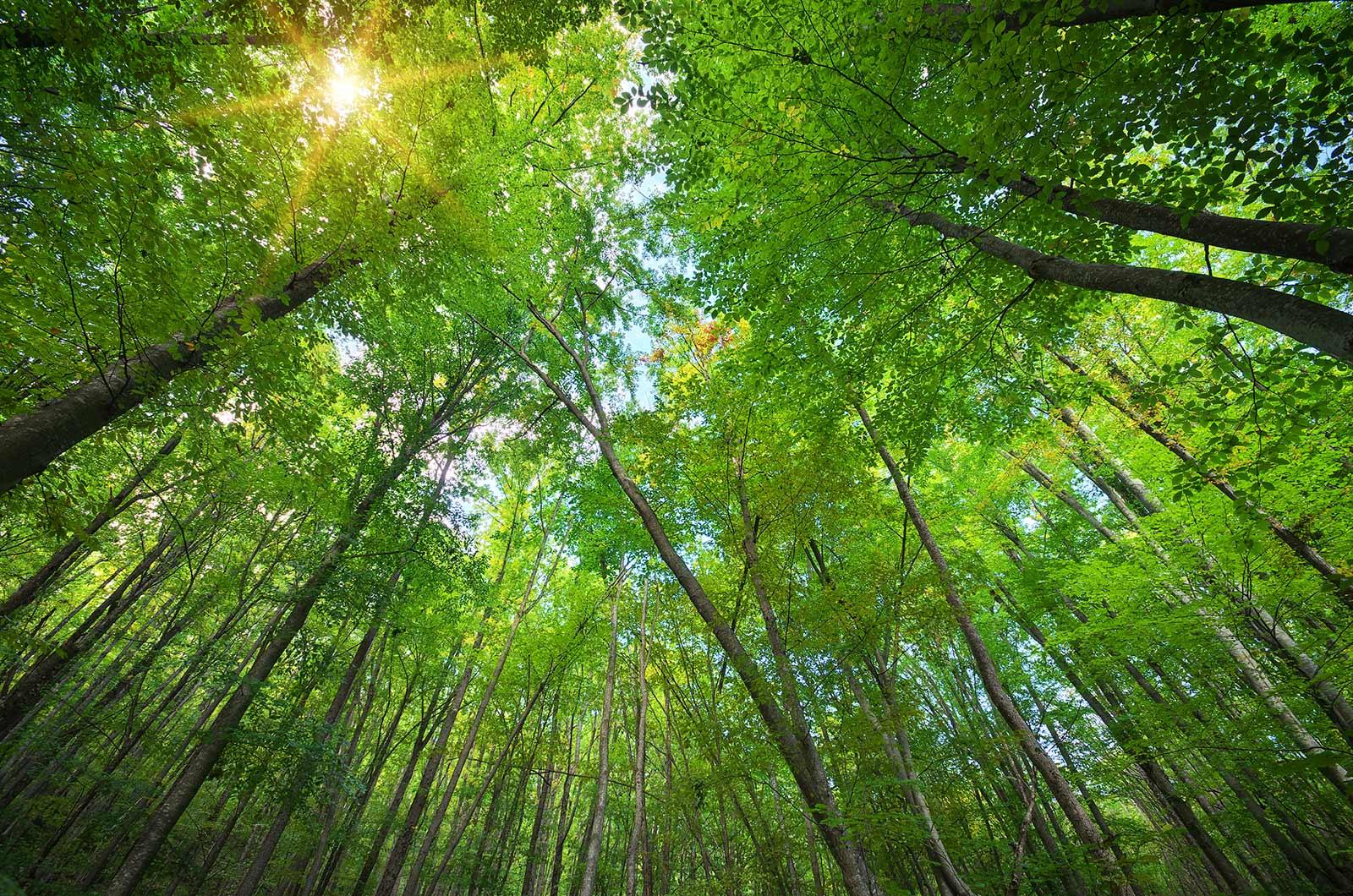 Bosques Sostenibles - Arquima
